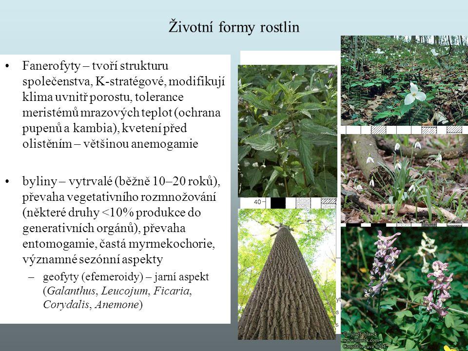 Životní formy rostlin Fanerofyty – tvoří strukturu společenstva, K-stratégové, modifikují klima uvnitř porostu, tolerance meristémů mrazových teplot (