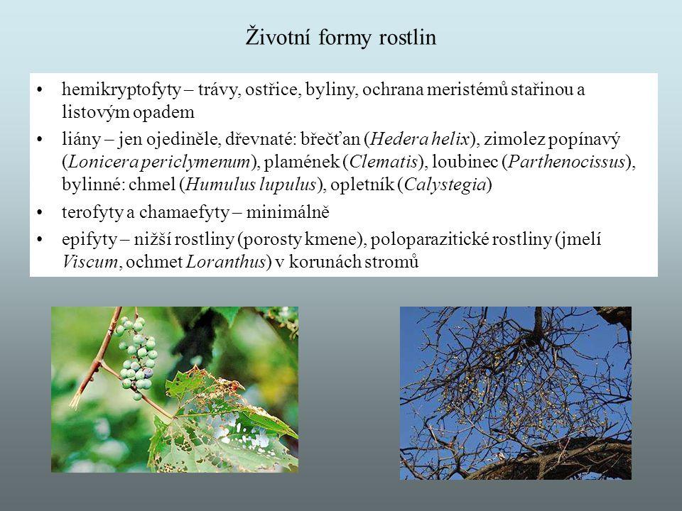 Životní formy rostlin hemikryptofyty – trávy, ostřice, byliny, ochrana meristémů stařinou a listovým opadem liány – jen ojediněle, dřevnaté: břečťan (