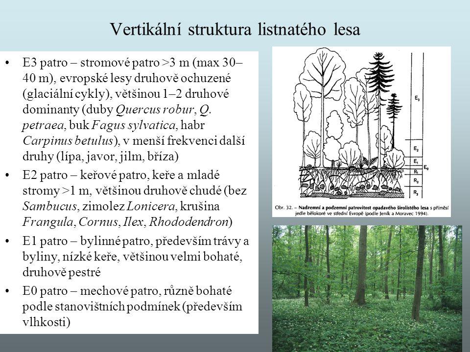 Vertikální struktura listnatého lesa E3 patro – stromové patro >3 m (max 30– 40 m), evropské lesy druhově ochuzené (glaciální cykly), většinou 1–2 dru