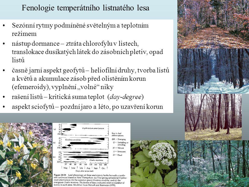 Fenologie temperátního listnatého lesa Sezónní rytmy podmíněné světelným a teplotním režimem nástup dormance – ztráta chlorofylu v listech, translokac