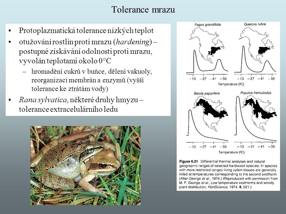 Tolerance mrazu Protoplazmatická tolerance nízkých teplot otužování rostlin proti mrazu (hardening) – postupné získávání odolnosti proti mrazu, vyvolá