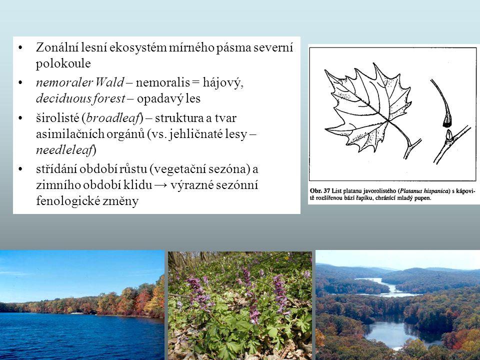 Zonální lesní ekosystém mírného pásma severní polokoule nemoraler Wald – nemoralis = hájový, deciduous forest – opadavý les širolisté (broadleaf) – st