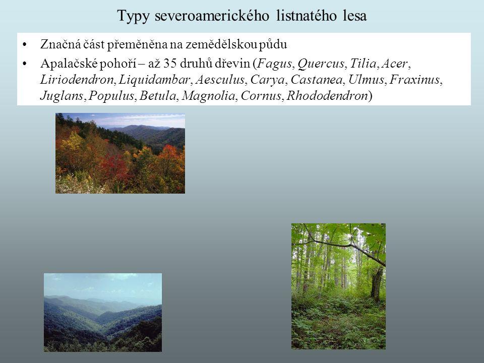 Typy severoamerického listnatého lesa Značná část přeměněna na zemědělskou půdu Apalačské pohoří – až 35 druhů dřevin (Fagus, Quercus, Tilia, Acer, Li