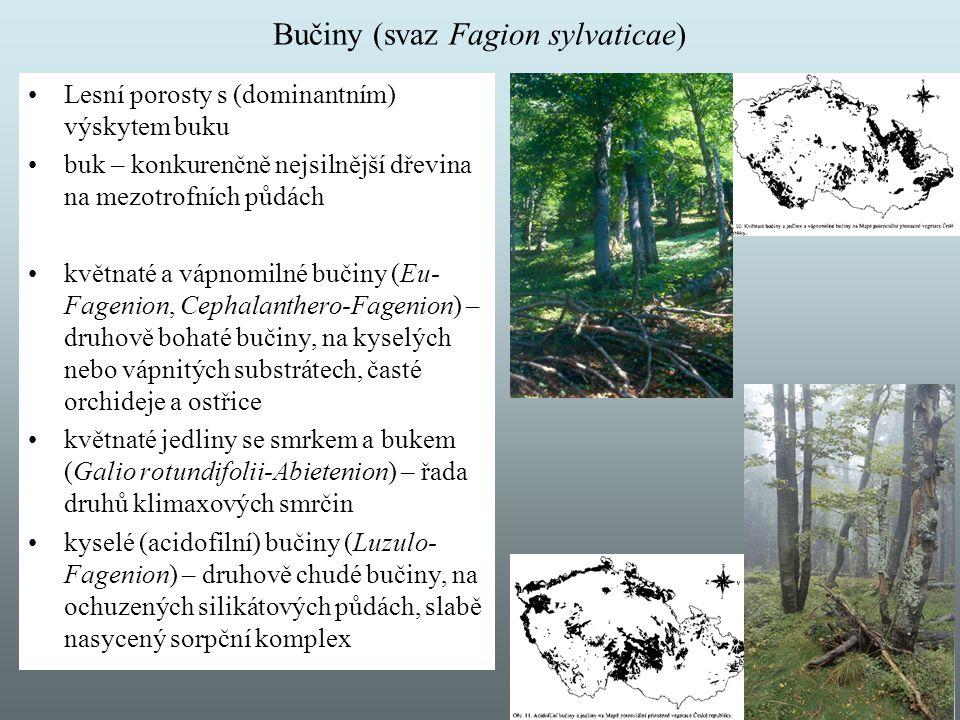 Bučiny (svaz Fagion sylvaticae) Lesní porosty s (dominantním) výskytem buku buk – konkurenčně nejsilnější dřevina na mezotrofních půdách květnaté a vá