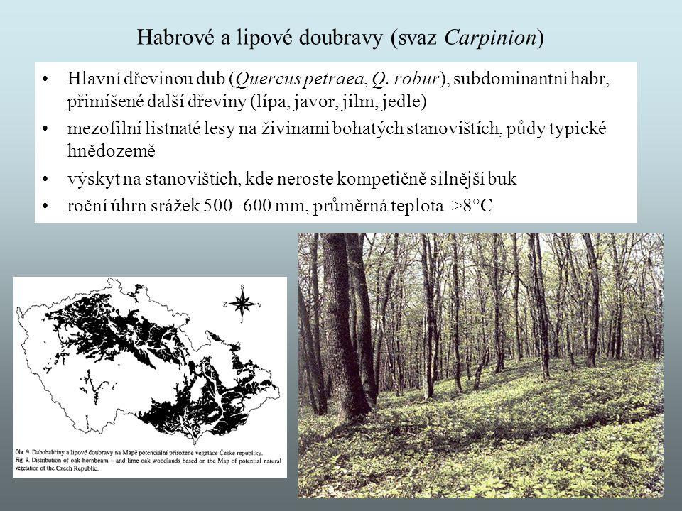 Habrové a lipové doubravy (svaz Carpinion) Hlavní dřevinou dub (Quercus petraea, Q. robur), subdominantní habr, přimíšené další dřeviny (lípa, javor,