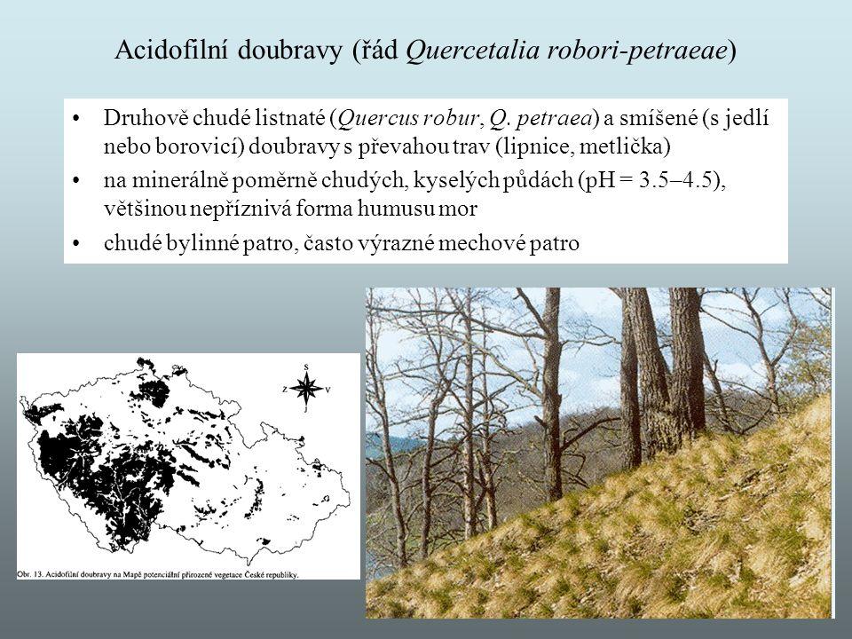 Acidofilní doubravy (řád Quercetalia robori-petraeae) Druhově chudé listnaté (Quercus robur, Q. petraea) a smíšené (s jedlí nebo borovicí) doubravy s