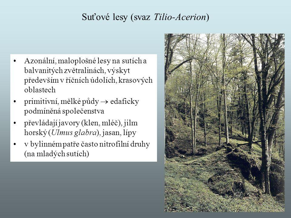 Suťové lesy (svaz Tilio-Acerion) Azonální, maloplošné lesy na sutích a balvanitých zvětralinách, výskyt především v říčních údolích, krasových oblaste