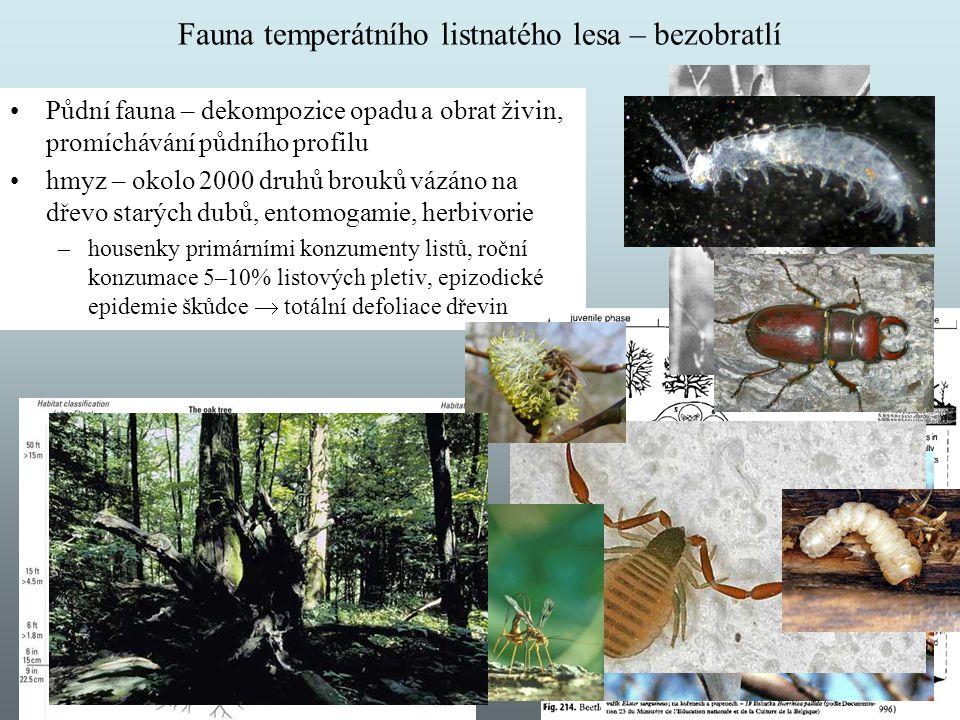 Fauna temperátního listnatého lesa – bezobratlí Půdní fauna – dekompozice opadu a obrat živin, promíchávání půdního profilu hmyz – okolo 2000 druhů br