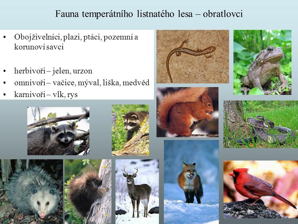 Fauna temperátního listnatého lesa – obratlovci Obojživelníci, plazi, ptáci, pozemní a korunoví savci herbivoři – jelen, urzon omnivoři – vačice, mýva