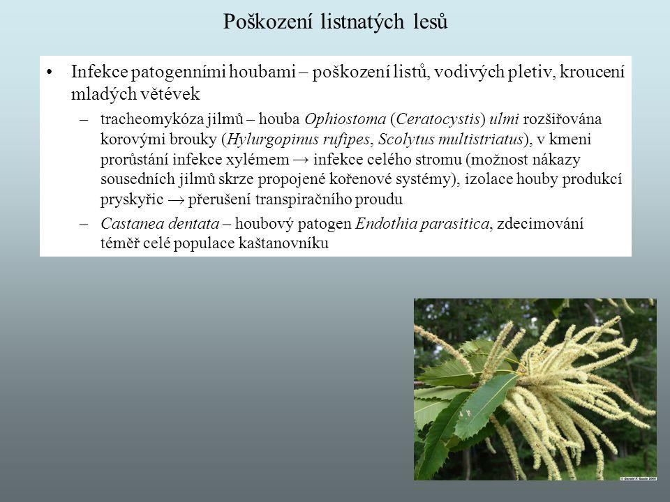Poškození listnatých lesů Infekce patogenními houbami – poškození listů, vodivých pletiv, kroucení mladých větévek –tracheomykóza jilmů – houba Ophios