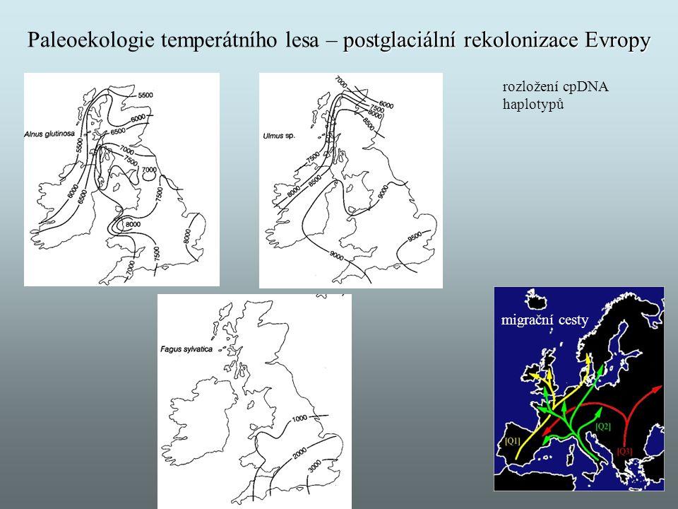 postglaciální rekolonizace Evropy Paleoekologie temperátního lesa – postglaciální rekolonizace Evropy migrační cesty rozložení cpDNA haplotypů