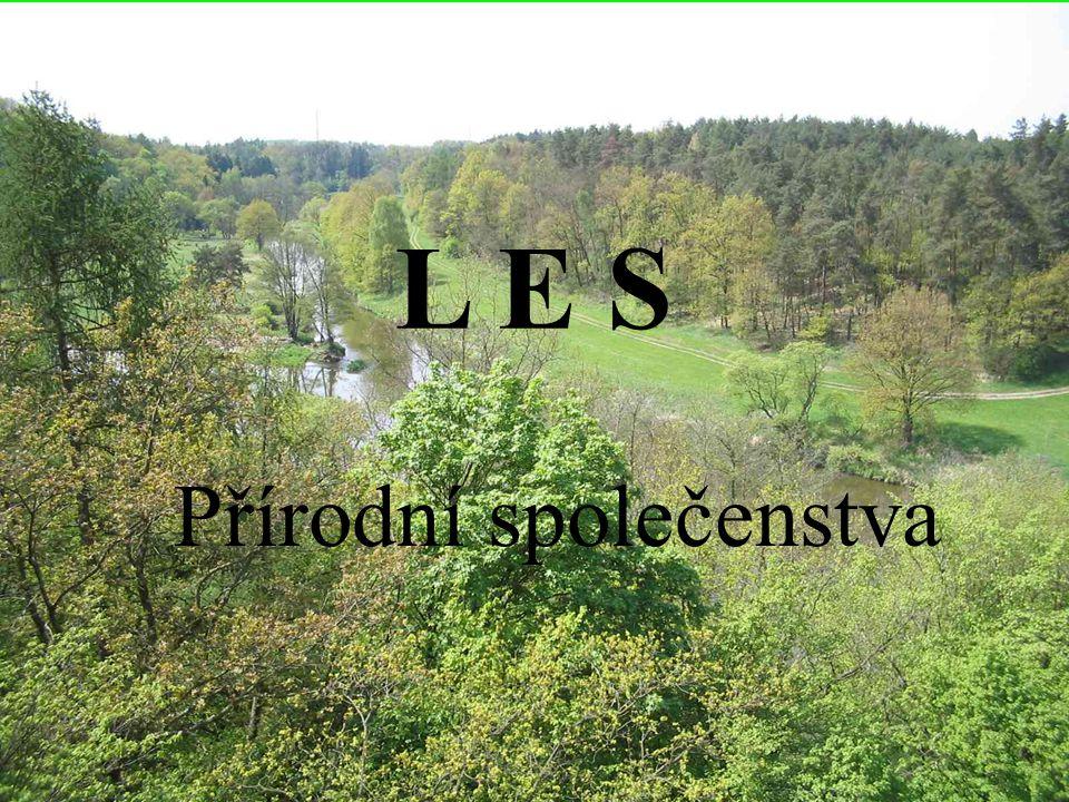 L E S Přírodní společenstva