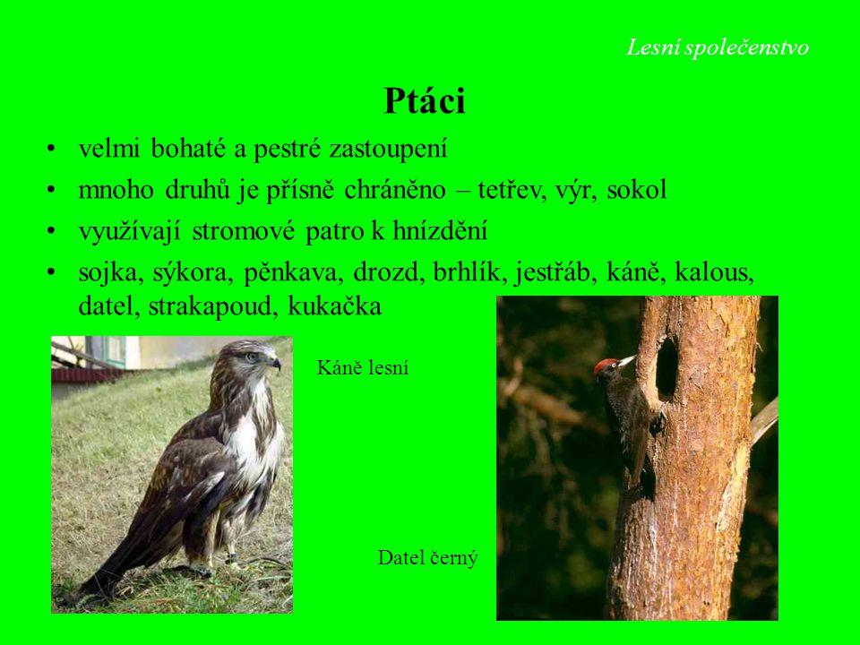 Lesní společenstvo Datel černý Káně lesní Ptáci velmi bohaté a pestré zastoupení mnoho druhů je přísně chráněno – tetřev, výr, sokol využívají stromov