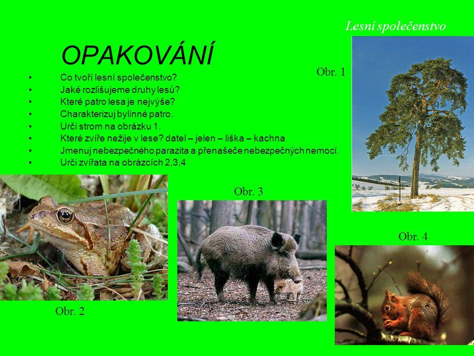 OPAKOVÁNÍ Co tvoří lesní společenstvo? Jaké rozlišujeme druhy lesů? Které patro lesa je nejvýše? Charakterizuj bylinné patro. Urči strom na obrázku 1.