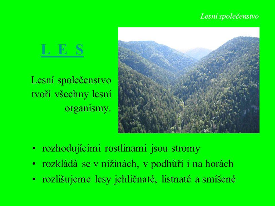 Lesní společenstvo tvoří všechny lesní organismy. rozhodujícími rostlinami jsou stromy rozkládá se v nížinách, v podhůří i na horách rozlišujeme lesy