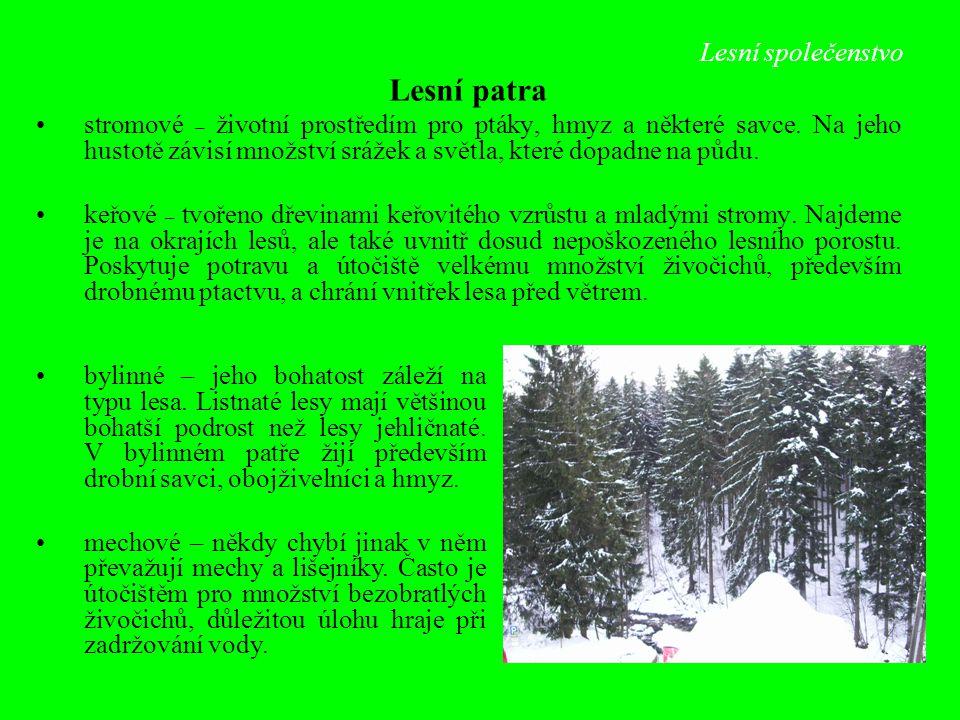 Lesní společenstvo Lesní patra stromové – životní prostředím pro ptáky, hmyz a některé savce. Na jeho hustotě závisí množství srážek a světla, které d