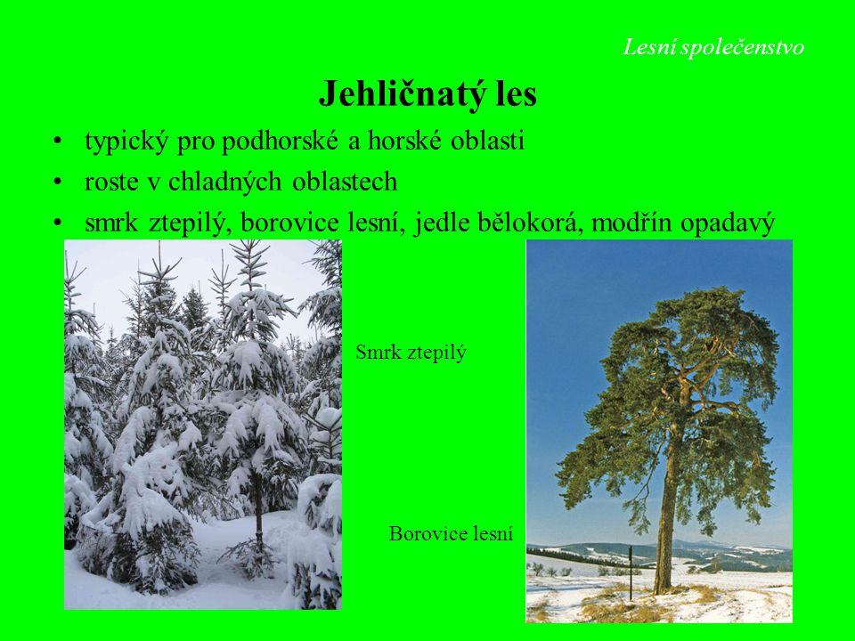 Lesní společenstvo Jehličnatý les typický pro podhorské a horské oblasti roste v chladných oblastech smrk ztepilý, borovice lesní, jedle bělokorá, mod