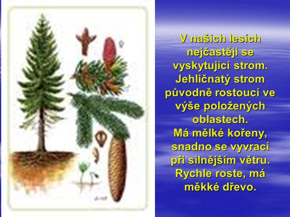 V našich lesích nejčastěji se vyskytující strom. Jehličnatý strom původně rostoucí ve výše položených oblastech. Má mělké kořeny, snadno se vyvrací př