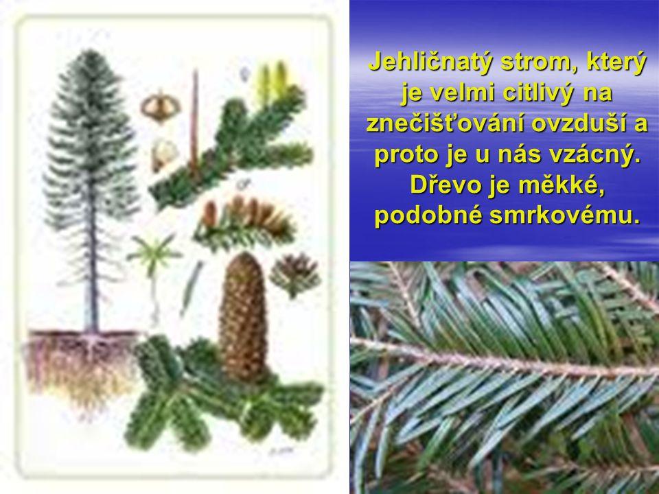 Jehličnatý strom, který je velmi citlivý na znečišťování ovzduší a proto je u nás vzácný. Dřevo je měkké, podobné smrkovému.
