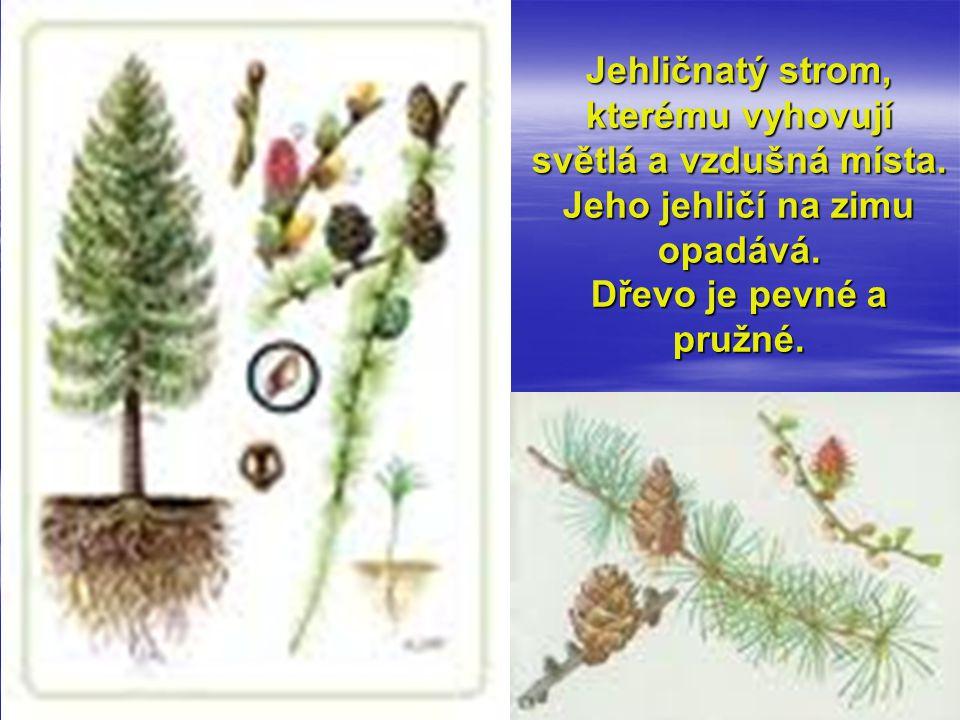 Jehličnatý strom, kterému vyhovují světlá a vzdušná místa. Jeho jehličí na zimu opadává. Dřevo je pevné a pružné.