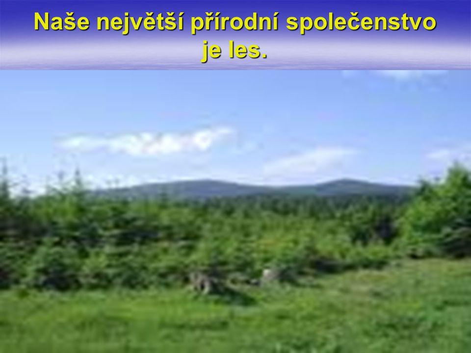 Jehličnatý strom, který je velmi citlivý na znečišťování ovzduší a proto je u nás vzácný.