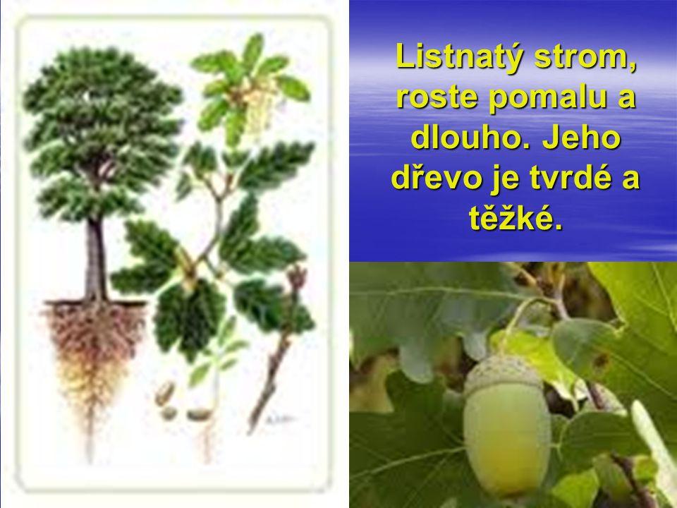 Listnatý strom, roste pomalu a dlouho. Jeho dřevo je tvrdé a těžké.
