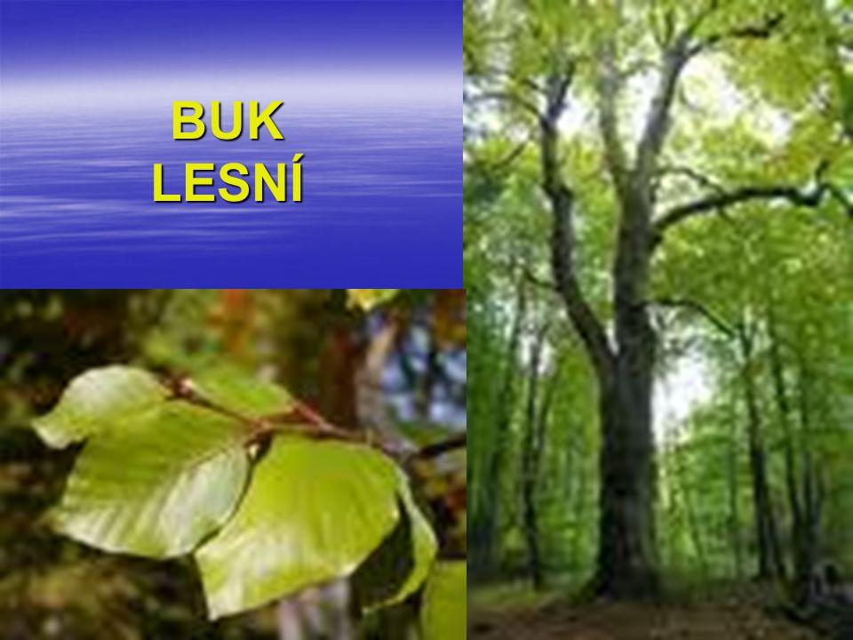 Listnatý strom rostoucí na pahorkatinách a v podhůří.