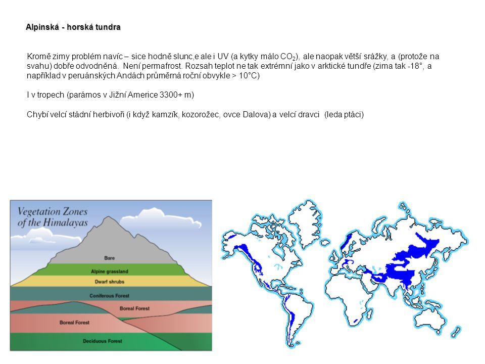 Alpinská - horská tundra Kromě zimy problém navíc – sice hodně slunc,e ale i UV (a kytky málo CO 2 ), ale naopak větší srážky, a (protože na svahu) do