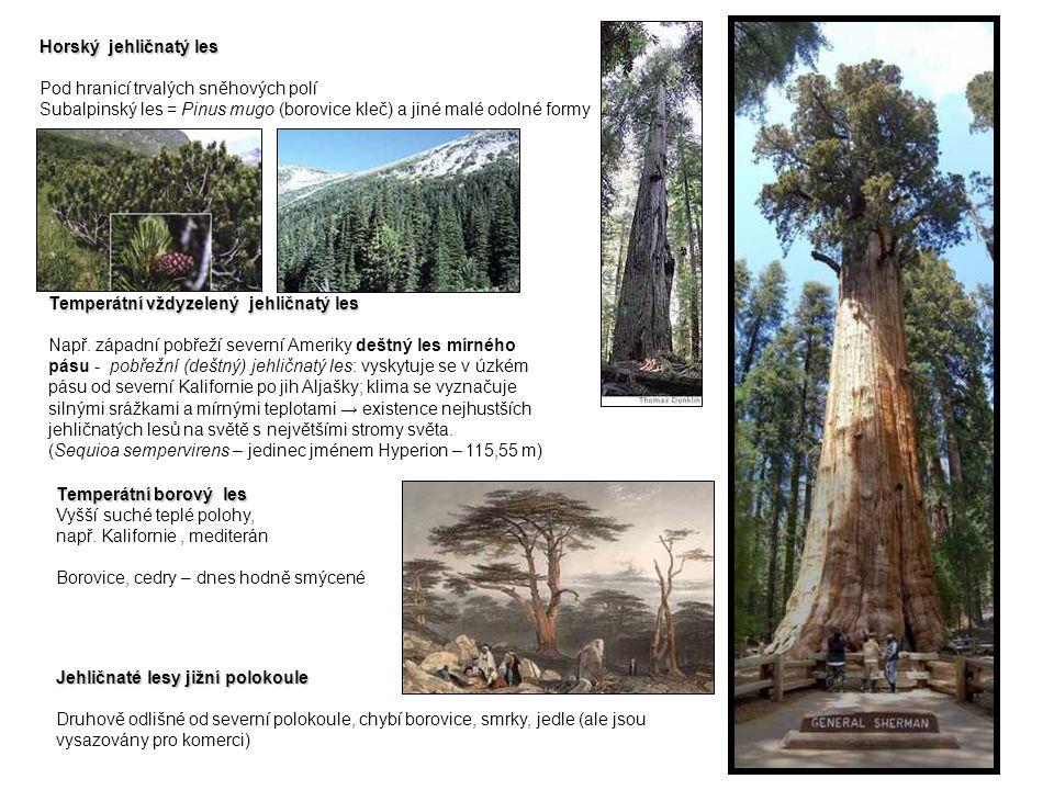 Horský jehličnatý les Pod hranicí trvalých sněhových polí Subalpinský les = Pinus mugo (borovice kleč) a jiné malé odolné formy Temperátní vždyzelený