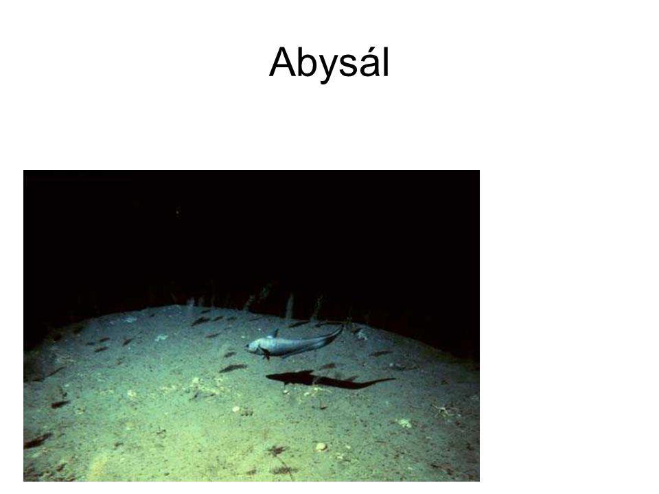 Abysál