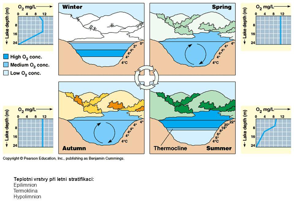 Teplotní vrstvy při letní stratifikaci: Epilimnion Termoklina Hypolimnion