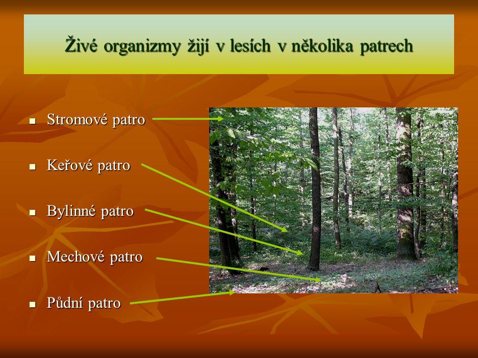 Živé organizmy žijí v lesích v několika patrech Stromové patro Stromové patro Keřové patro Keřové patro Bylinné patro Bylinné patro Mechové patro Mech