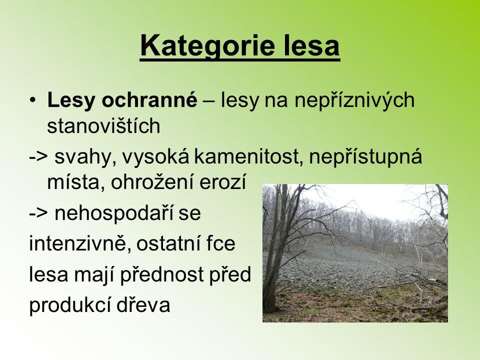 Kategorie lesa Lesy ochranné – lesy na nepříznivých stanovištích -> svahy, vysoká kamenitost, nepřístupná místa, ohrožení erozí -> nehospodaří se inte