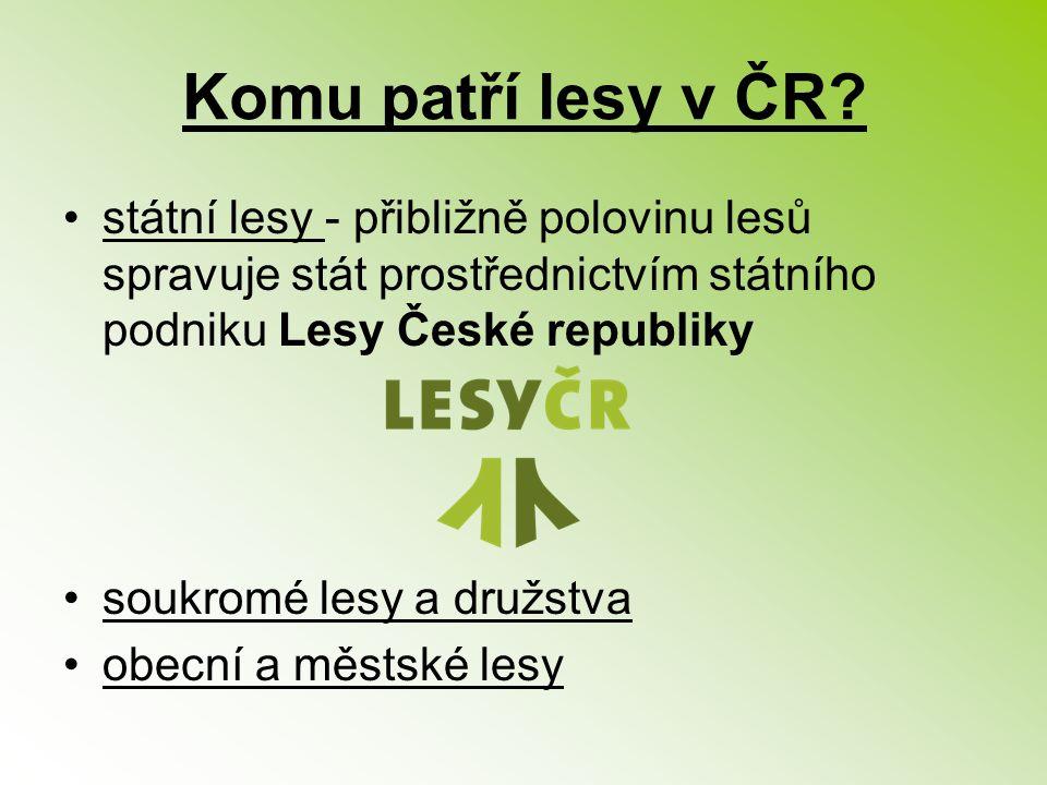 Komu patří lesy v ČR? státní lesy - přibližně polovinu lesů spravuje stát prostřednictvím státního podniku Lesy České republiky soukromé lesy a družst