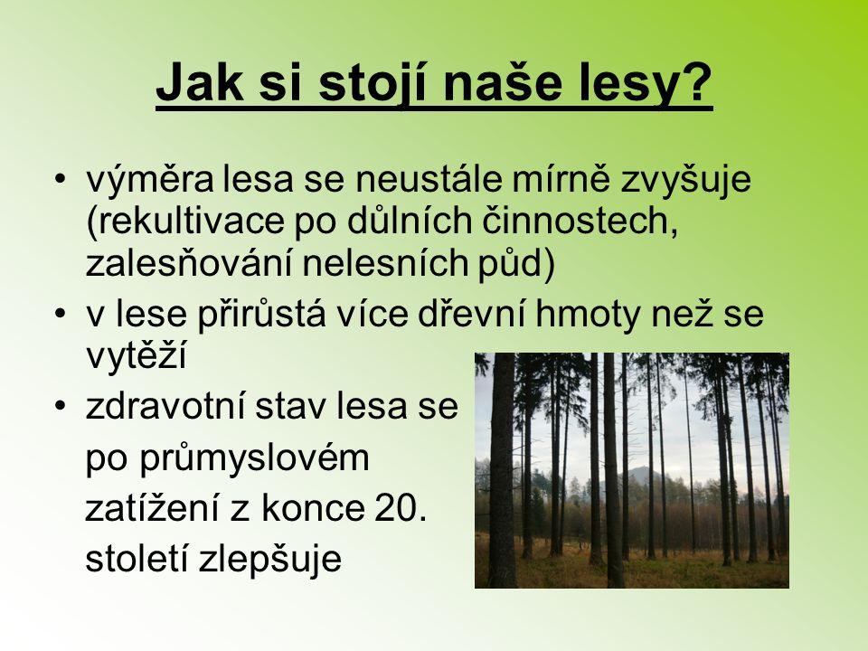 Jak si stojí naše lesy? výměra lesa se neustále mírně zvyšuje (rekultivace po důlních činnostech, zalesňování nelesních půd) v lese přirůstá více dřev