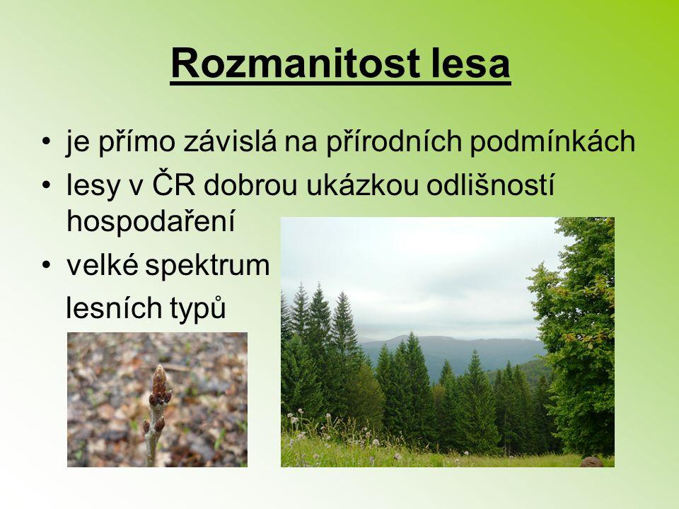 Rozmanitost lesa je přímo závislá na přírodních podmínkách lesy v ČR dobrou ukázkou odlišností hospodaření velké spektrum lesních typů