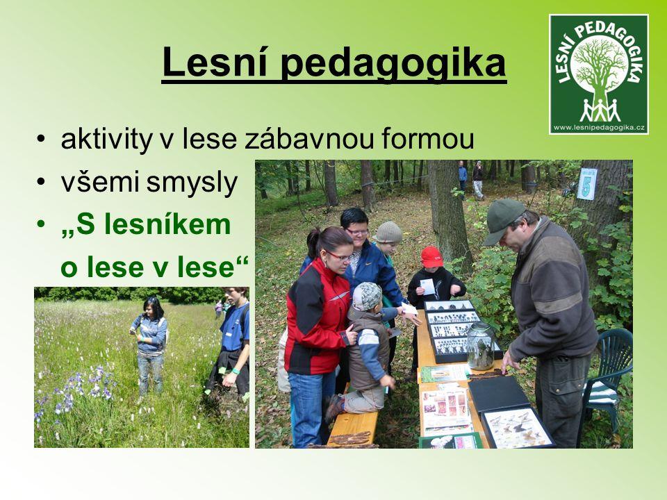 """Lesní pedagogika aktivity v lese zábavnou formou všemi smysly """"S lesníkem o lese v lese"""""""