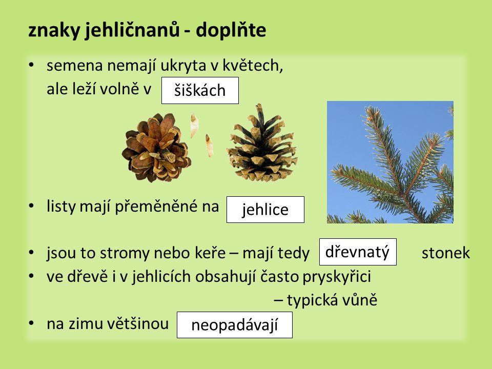 znaky jehličnanů - doplňte semena nemají ukryta v květech, ale leží volně v listy mají přeměněné na jsou to stromy nebo keře – mají tedy stonek ve dře