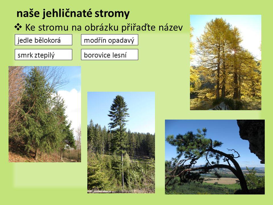 naše jehličnaté stromy  Ke stromu na obrázku přiřaďte název jedle bělokorá borovice lesní modřín opadavý smrk ztepilý