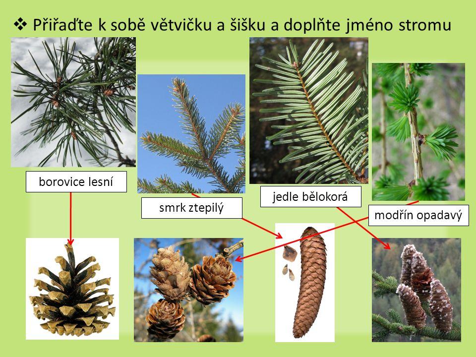  Přiřaďte k sobě větvičku a šišku a doplňte jméno stromu smrk ztepilý jedle bělokorá modřín opadavý borovice lesní