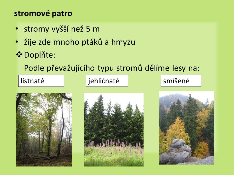 stromové patro stromy vyšší než 5 m žije zde mnoho ptáků a hmyzu  Doplňte: Podle převažujícího typu stromů dělíme lesy na: jehličnatésmíšenélistnaté