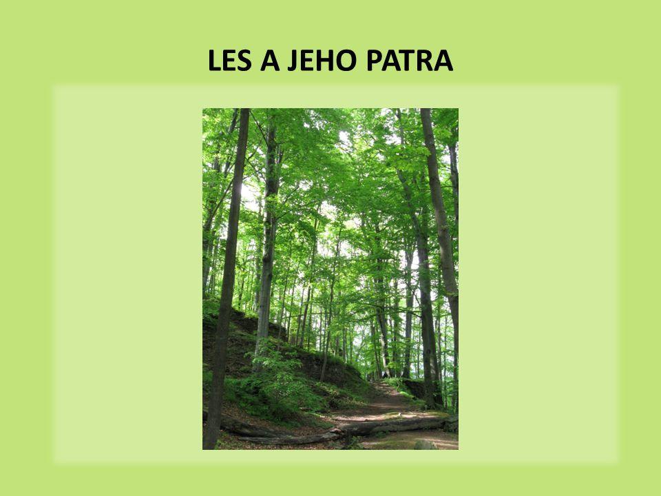 les rozdělujeme na několik pater patro – část společenstva dosahující podobné výšky  Pokuste se správně přiřadit patra k obrázku stromové keřové bylinné mechové kořenové