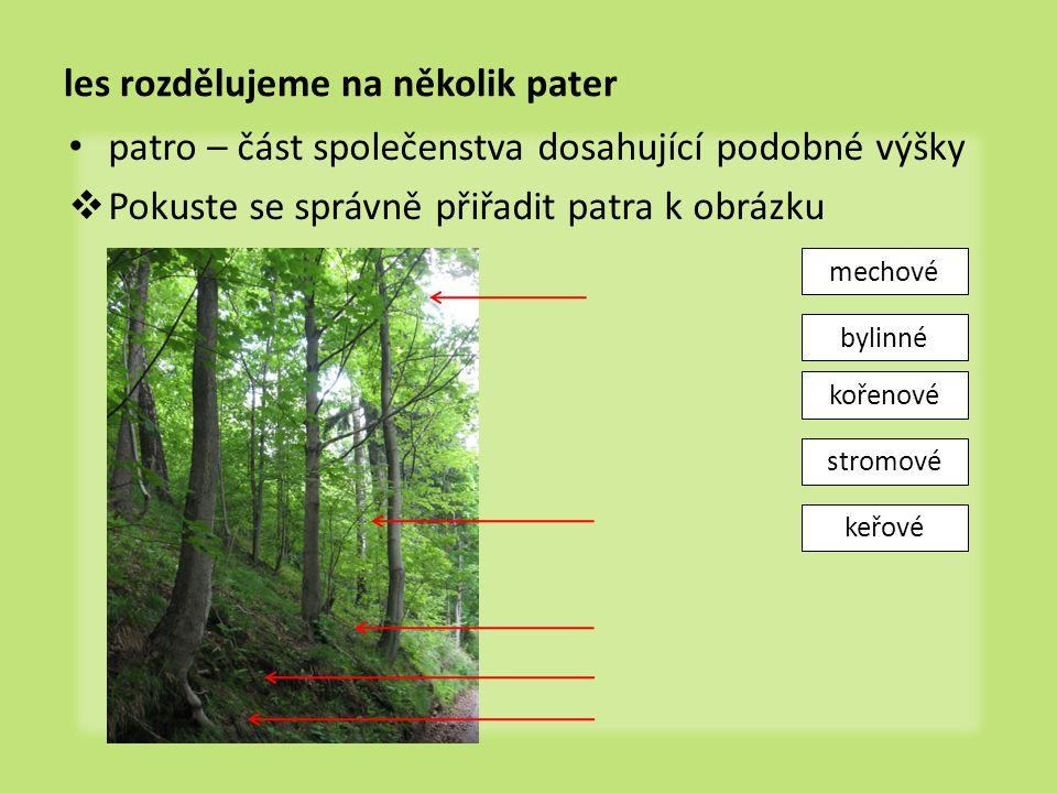 les rozdělujeme na několik pater patro – část společenstva dosahující podobné výšky  Pokuste se správně přiřadit patra k obrázku stromové keřové byli