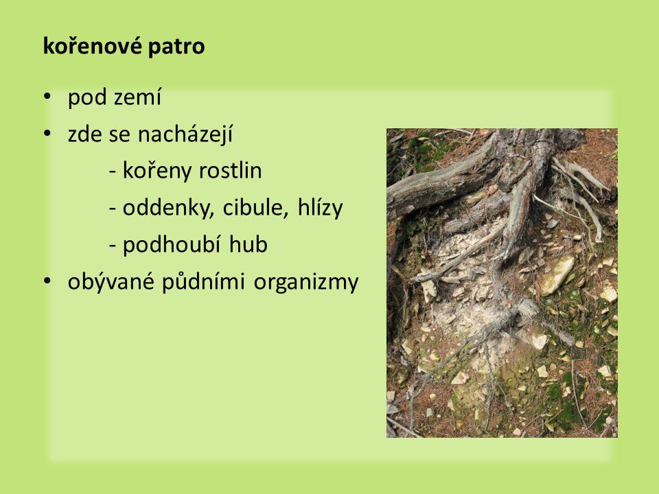 kořenové patro pod zemí zde se nacházejí - kořeny rostlin - oddenky, cibule, hlízy - podhoubí hub obývané půdními organizmy