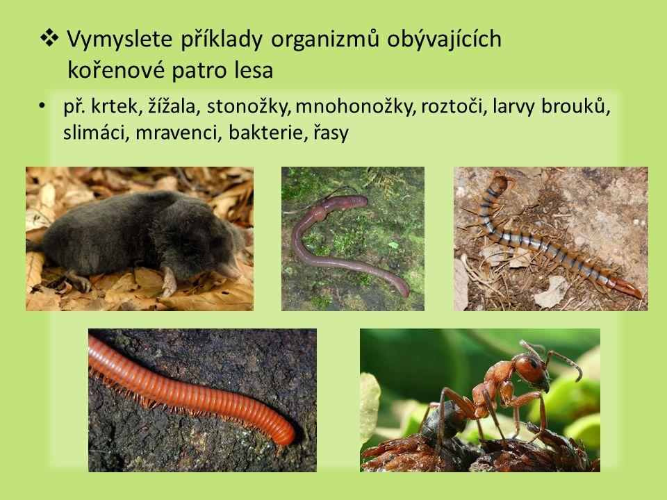  Vymyslete příklady organizmů obývajících kořenové patro lesa př. krtek, žížala, stonožky, mnohonožky, roztoči, larvy brouků, slimáci, mravenci, bakt