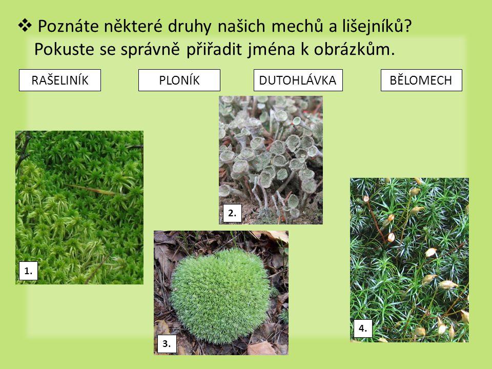bylinné patro sem řazeny všechny byliny a dřeviny nižší než 1 m největší druhová bohatost (biodiverzita)