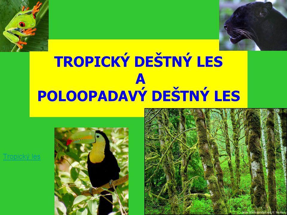 TROPICKÝ DEŠTNÝ LES A POLOOPADAVÝ DEŠTNÝ LES Tropický les