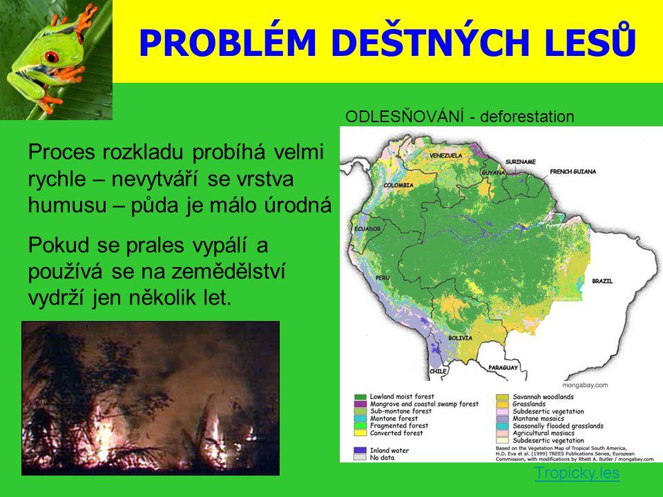 PROBLÉM DEŠTNÝCH LESŮ Proces rozkladu probíhá velmi rychle – nevytváří se vrstva humusu – půda je málo úrodná Pokud se prales vypálí a používá se na z