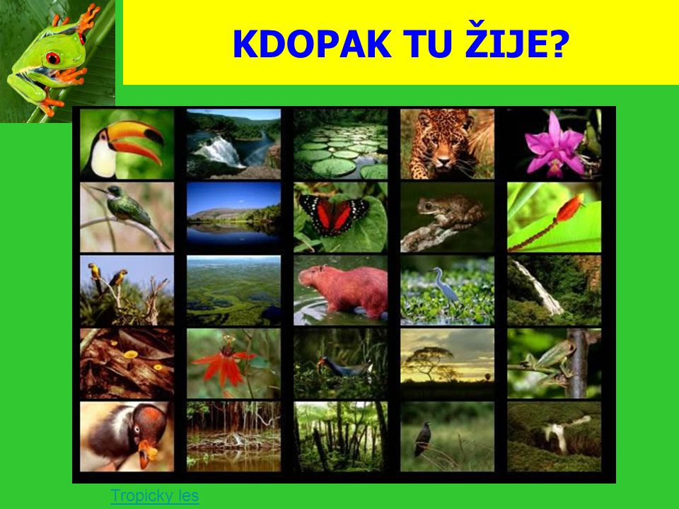 KDOPAK TU ŽIJE? Tropicky les