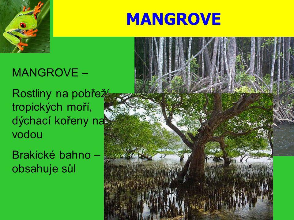MANGROVE MANGROVE – Rostliny na pobřeží tropických moří, dýchací kořeny nad vodou Brakické bahno – obsahuje sůl